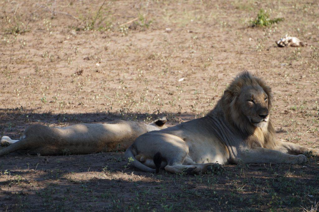 Leeuw-Kruger-National-Park
