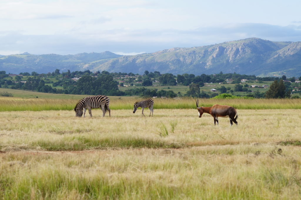 Milwane-wildlife-sanctuary-Eswatini