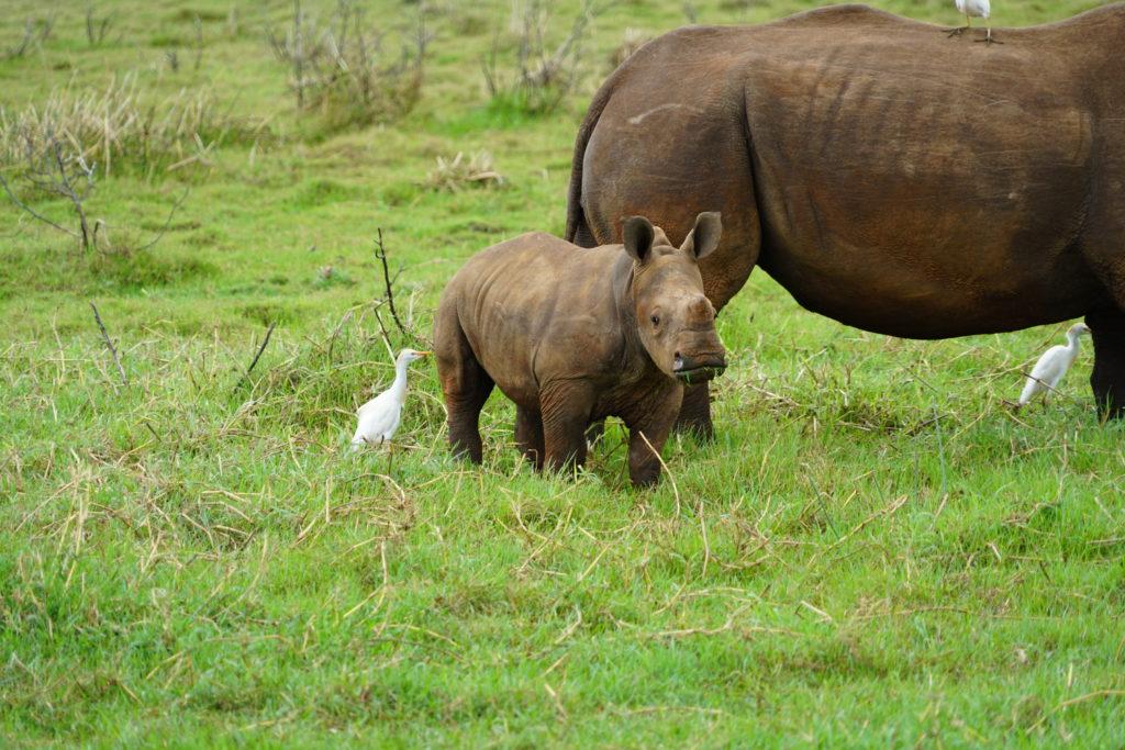 Pongolapoort-nature-reserve-neushoorn